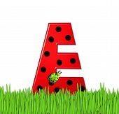 Alphabet Lady Bug Red E