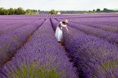 picture of lavender field  - Young romantic woman picks some lavender from purple lavender field. In white dress with hat in her hand a bouquet of lavender 