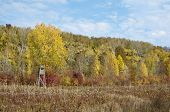 Autumn Yellow Color Forest With Hunting Stand