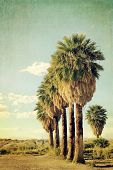 Palm trees in a row in a blue sky. VIntage style. Cross processed to look like an aged instant picture with textures.