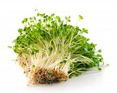 stock photo of bean sprouts  - fresh Bean Sprouts on a White Background - JPG