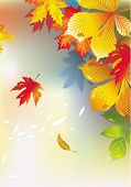 Colorful background from autumn leaves.