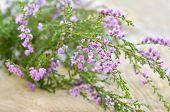 Calluna Vulgaris (common Heather) Flowers On Wooden Surface