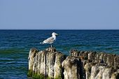 Seagull On The Breakwater