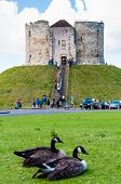 Tourists and wildlife in front of Clifford's Tower York England.