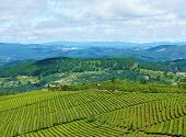 pic of mountain chain  - Impressive landscape at Dalat Vietnam in sunny day amazing cloudy sky chain of mountain far away tea tree in row line beautiful tea plantation wonderful country view for Da Lat travel - JPG