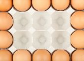Chicken Eggs Frame