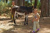 Local Children With Donkey , Turkey