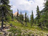 Dense Siberian Mountain Forest