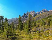 Alpine Woodlands