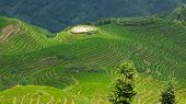Jongli Rice Terraces in Guilin, China