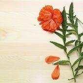Poppy Flowers On Wood Background