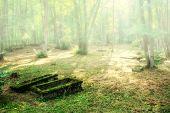 derelict old graves