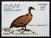 Postage Stamp Sahara 1991 Ruppells Vulture, Bird