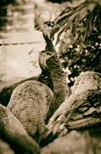 Faux Antiqued Image Of Peahens Looking Away
