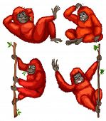 Illustraion of a set of orangutan