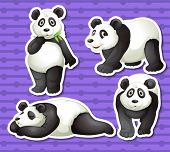 Illustration of a set of panda with background