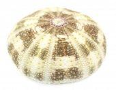 Seashell isolated on white