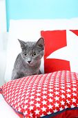 Grey cat on sofa on blue background