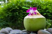 Tropical fresh coconut cocktail with purple orchid and straw