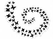Spiral Of Flying Butterflies