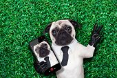 picture of pug  - pug dog taking a selfie on grass or meadow in the park with peace or victory fingers - JPG