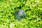 Glass Globe In Green Grass