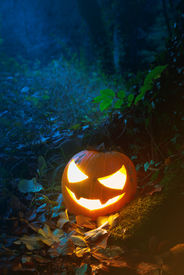 picture of jack-o-laterns-jack-o-latern  - Glooming pumpking halloween latern with lit candle on tree root with fallen leaves around - JPG