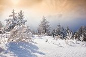 image of ural mountains  - Snow covered trees in the mountains at sunset - JPG