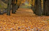 Close up on autumn leaves on a parkway.