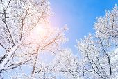 stock photo of winter trees  - Snow covered trees in the mountains at sunset - JPG