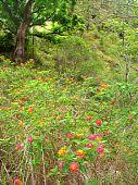 Barron Gorge National Park - Australia