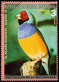 Equatorial Guinea - Circa 1980: A Stamp Printed In Equatorial Guinea Shows Tropical Bird , Circa 198