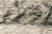 Abstract Texture Of Beige Fur Fabric