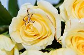 Gold Chain With symbol On A Big Yellow Roses