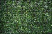 Blurry Image Of Green Leaves For Background
