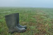Rain Boots, Rubber Boots Standing On A Wet Meadow. Fog In The Morning