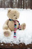 Lost teddy bear in the winter forest