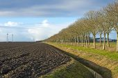 image of plowed field  - Row of trees along a plowed field in winter - JPG