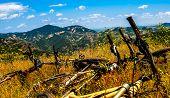 Mountain Bikes Resting.