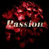 Passion Typography Grunge Style Illustration Design