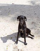 Black Dog With An Evil Eye