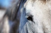 foto of stable horse  - A detail of a horse eye in a stable  - JPG