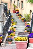 foto of vase flowers  - Flower pots lining stair steps - JPG