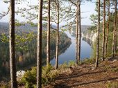 Pine Above Breakage
