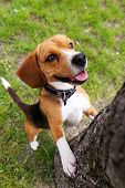 stock photo of dog park  - Funny cute dog in park - JPG
