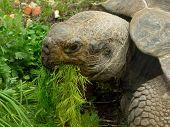 Turtle Eats Grass