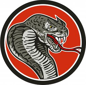 image of serpent  - Illustration of a cobra viper snake serpent showing fangs and forked tongue viewed from side set inside circle done in retro style - JPG