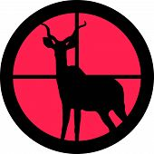 In The Scope Series - Kudu / Koedoe