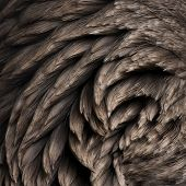 Close-up of Toulouse goose feathers